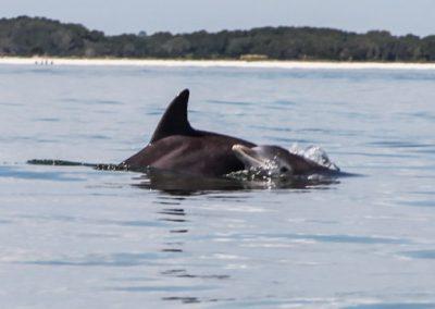 dolphin 4x3-7639