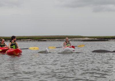 Amelia River Kayak Tour 16x9-9168
